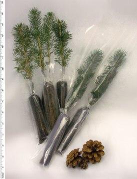 treeseedlings-only